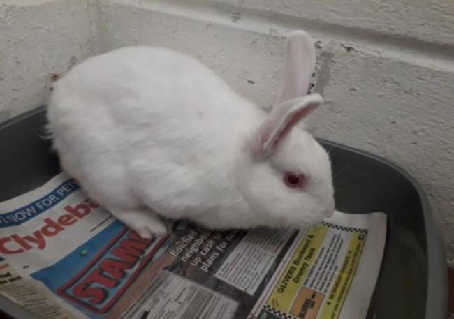 Snow the rabbit