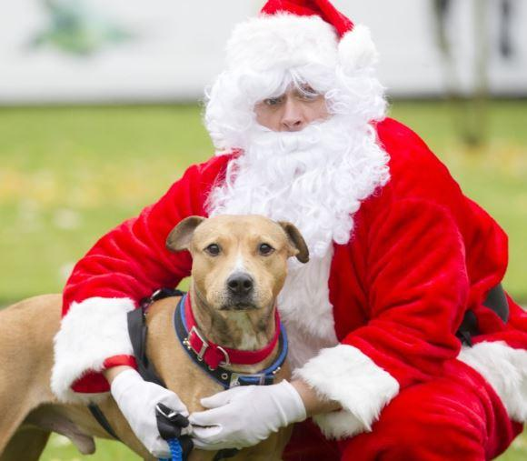 Dogs can get the chance to meet Santa at the Scottish SPCA's 'Grrr-otto'