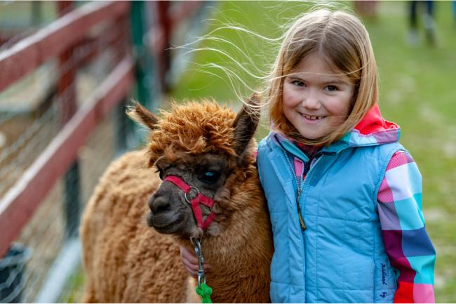 Treat youngsters to a walk with some cuddly alpacas