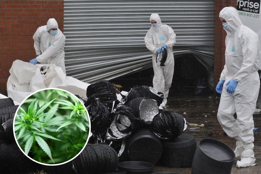 Cannabis haul worth £600,000 found inside Clydebank warehouse